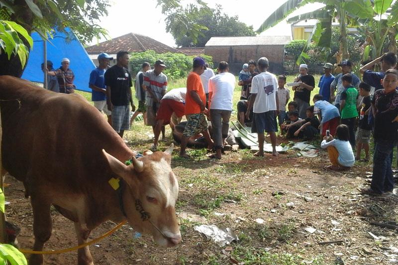 Warga Rw.09 Kelurahan Yosorejo Metro Timur Potong 5 Ekor Sapi Dan 2 Ekor Kambing