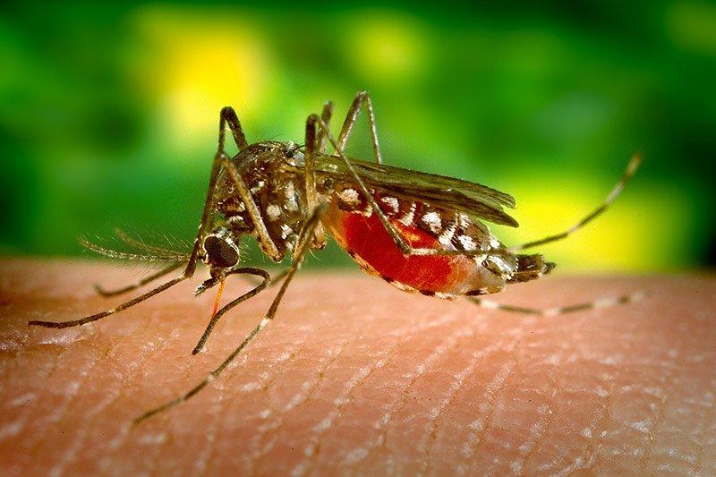 Waspada Bahaya Virus Zika Mengancam Anda