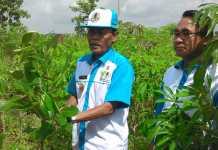 Kota Metro: Bagi Pasangan yang Mau Menikah, Wajib Tanam 5 Batang Pohon
