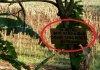 Tanaman Sering Dicuri, Petani Pasang Papan Peringatan Unik