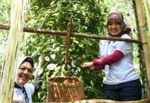 Melalui Festival Lada Hitam, Chusnunia Chalim Ingin Kembalikan Kejayaan Lada di Lamtim