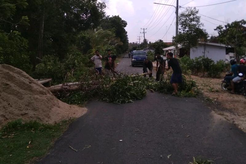 Diterpa Badai Angin, Pohon Penghijauan di Jalan Irigasi Tumbang Tutup Badan Jalan 03
