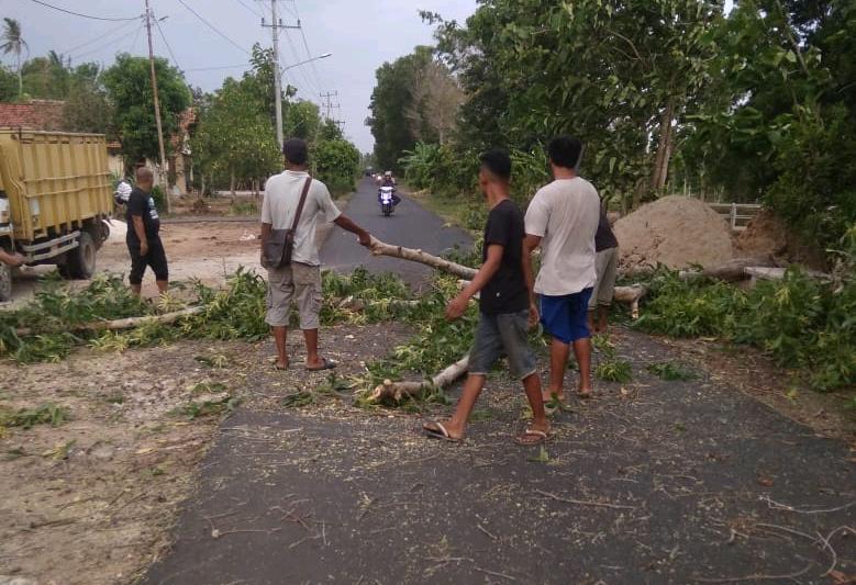 Diterpa Badai Angin, Pohon Penghijauan di Jalan Irigasi Tumbang Tutup Badan Jalan 02