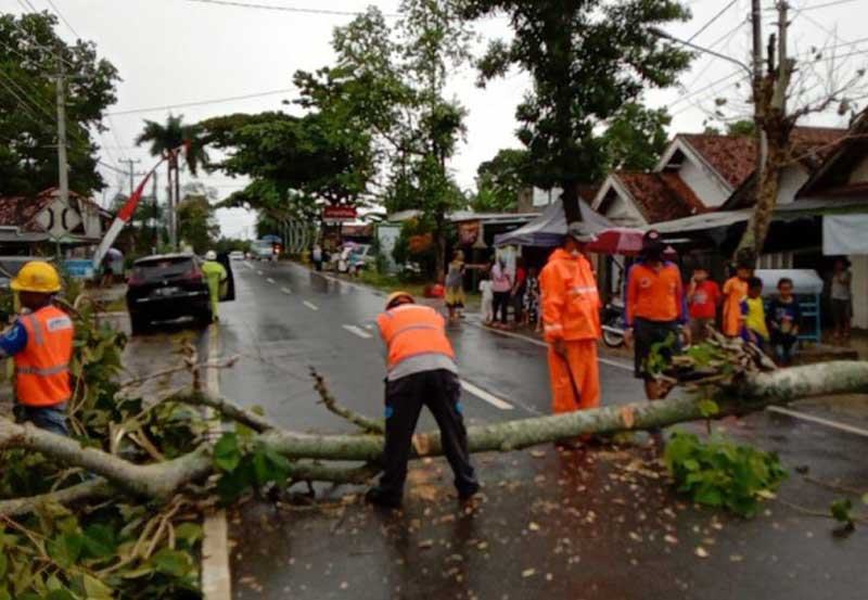 Pohon Tumbang di Jalan AR Prawira Negara, BPBD Metro Gerak Cepat Antisipasi Kemacetan 01