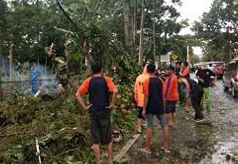 Pohon Tumbang di Jalan AR Prawira Negara, BPBD Metro Gerak Cepat Antisipasi Kemacetan 02